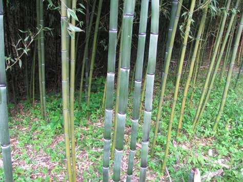 Bamboo List